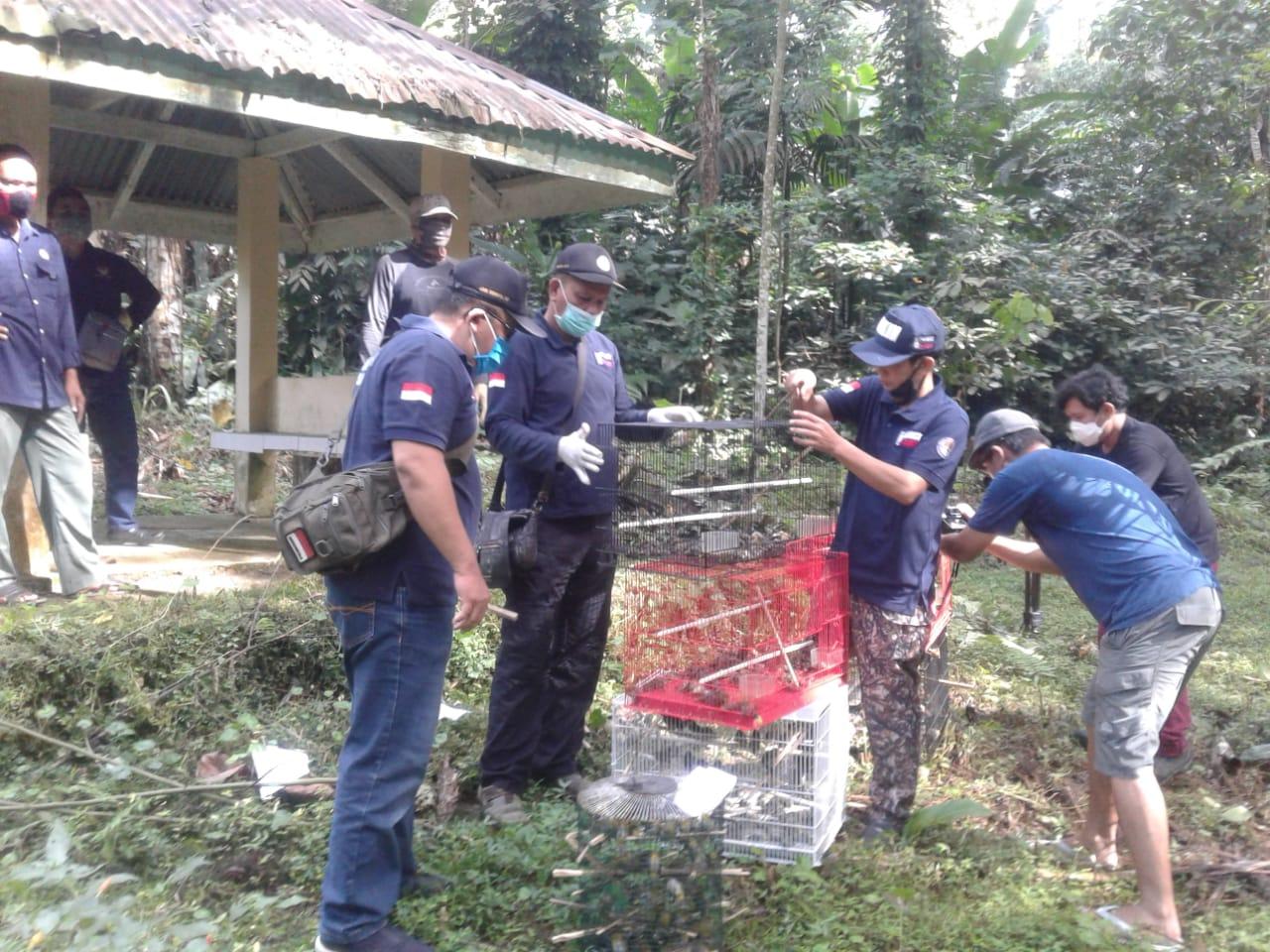 Ket foto : Pemeriksaan S selaku Penerima Burung saat diintrogasi di Kantor Balai Gakkum KLHK Wilayah Sumatera Seksi Wilayah I Medan.(ist)
